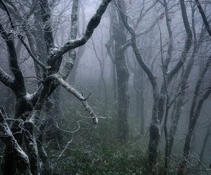 forest, dark, and photography image