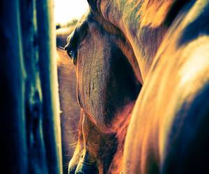 colors, equitation, and free image
