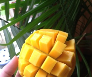 Fruit Mango And Food Image