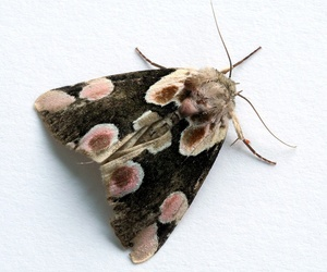insect, moth, and butterfly image