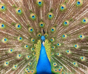 animal, beautiful, and colors image