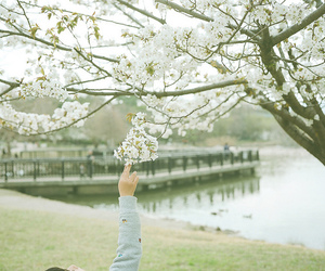 beautiful, tree, and blossoms image