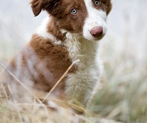 dog, cute, and pets image