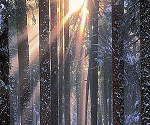 tree, forest, and sun image