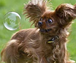dog, funny, and bubbles image