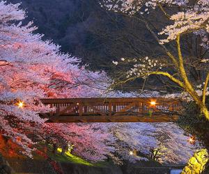 japan, nature, and bridge image