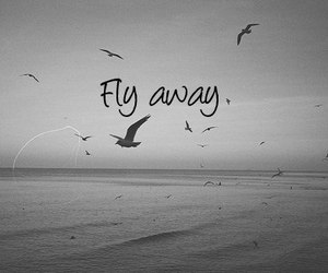 fly, bird, and quotes image