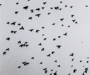 alone, fly, and away image