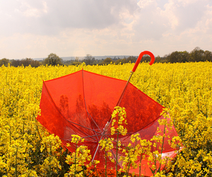 umbrella, yellow, and flowers image