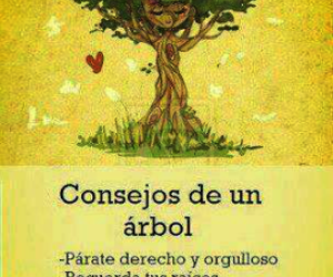 tree, beauty, and frases image