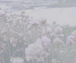 flowers, pale, and header image