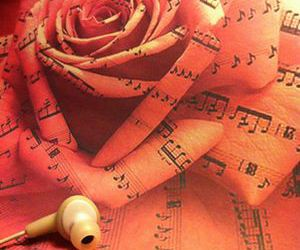 music, pink, and rose image