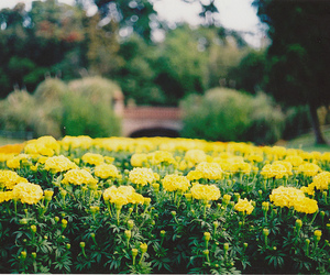 vintage, photography, and flowers image