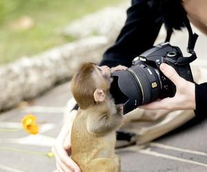 monkey, cute, and camera image