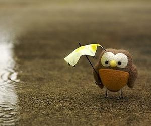 owl, cute, and rain image