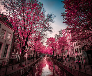 pink, tree, and city image