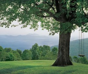 green, swing, and tree image