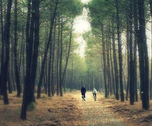bike, grove, and tree image