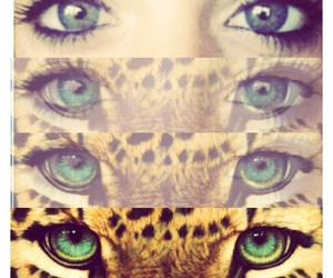 eyes, tiger, and green image