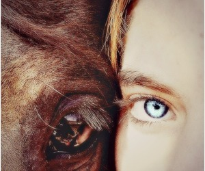 horse and friends image