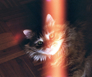 cat, vintage, and hipster image