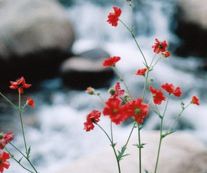 amazing, red flowers, and water image