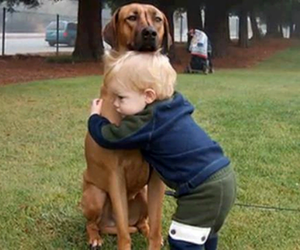 adorable, best friends, and dogs image