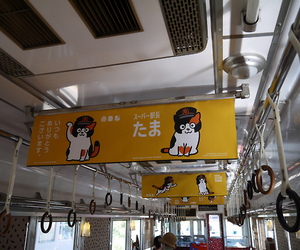 asia, cat, and japan image