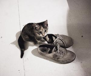 cat, kitten, and vans image