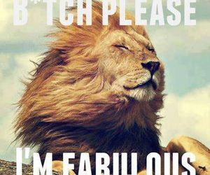 fabulous, lion, and bitch image