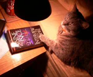 book, cat, and anne rice image