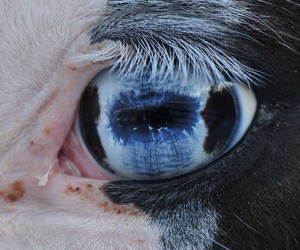 eye and horse image