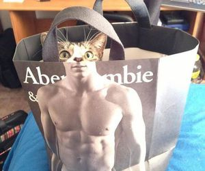 cat, cute, and man image