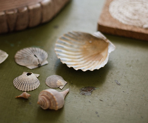 beautiful, hipster, and shells image