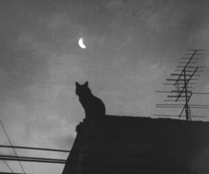 cat, moon, and night image