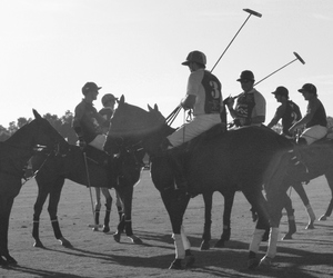 boys, horses, and Polo image