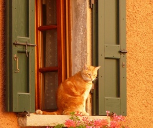 beautiful, cat, and cottage image