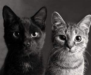 black & white and cats image