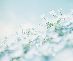 flowers, pastel, and white image