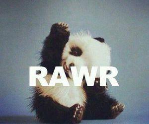 panda, rawr, and cute image