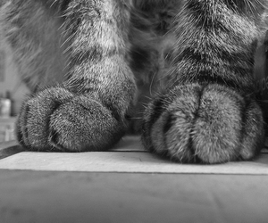 black and white, noir et blanc, and cat image