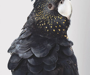 bird, black, and parrot image