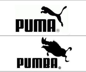 puma, pumba, and funny image