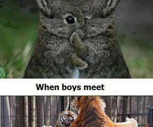 boy, funny, and tigers image