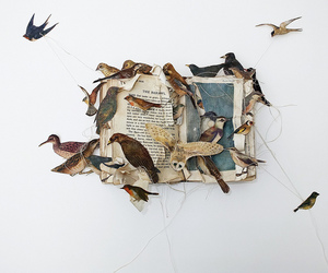 birds, book, and owl image