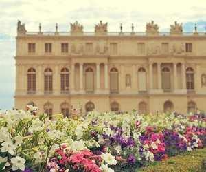 flowers, photography, and architecture image