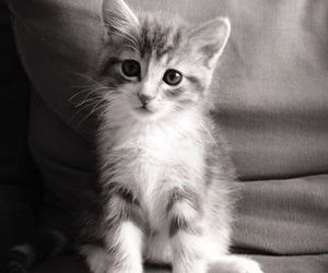black and white, cat, and hipster image