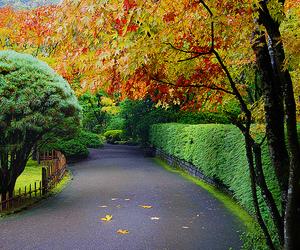 autumn, beautiful, and D700 image