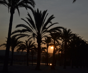 beach, mallorca, and palm image
