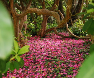 pink, amazing, and flowers image